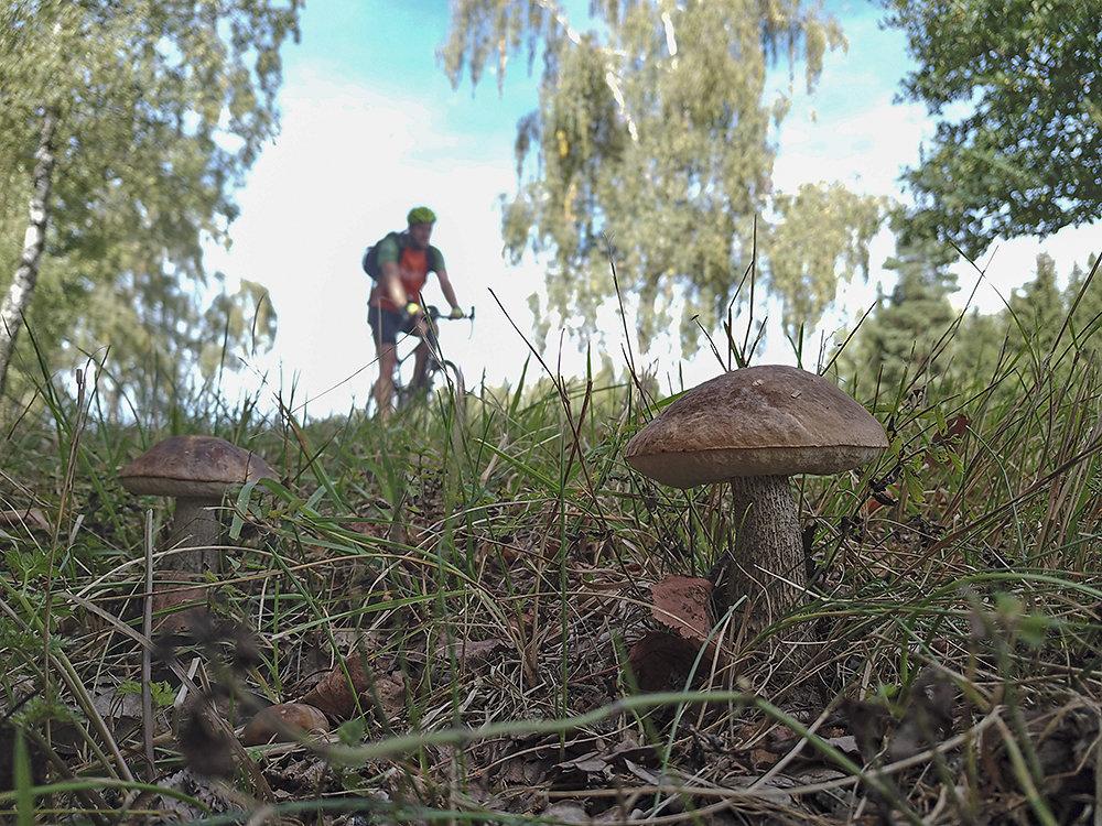 Fahrrad-Tschechien.jpg